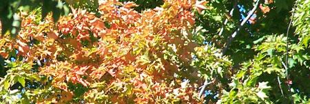 First Fall Foliage