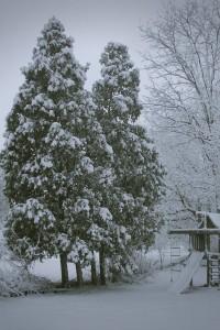Winter storm snow on trees
