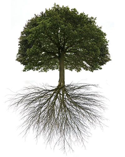 Oak Tree With Roots Sketch Roots | GregsHead